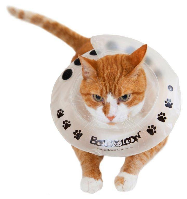 Find Great Deals On The Best Selling Cat Recovery Collars & Cones!